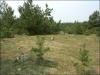 Ружаны. Еврейское кладбище