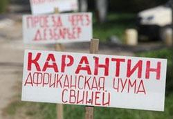 Африканская чума свиней в Беларуси -  в Пружанском районе определены буферные зоны