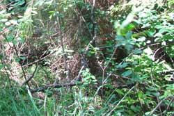 На Витебщине в лесах устанавливают камеры видеонаблюдения «в камуфляже»