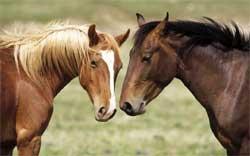 Пинские пограничники задержали украинских контрабандистов с лошадьми