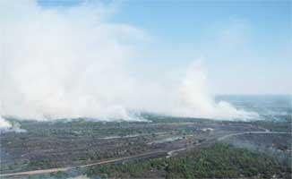 В Столинском районе тушат пожар на бывшем военном полигоне