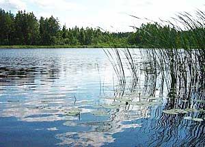 В минувшие выходные пять человек утонули в водоемах области