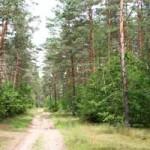 В большинстве районах Брестчины введен запрет на посещение лесов