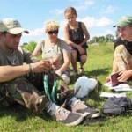 Специалисты бьют тревогу: аисты этим летом голодают и заводят мало птенцов