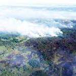С 4 августа введён полный запрет на посещение лесов в Пружанском районе