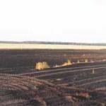Лесной пожар в Осиповичском районе ликвидирован