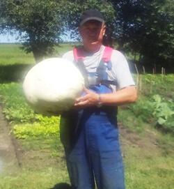 Гигантские грибы в Каменецком районе
